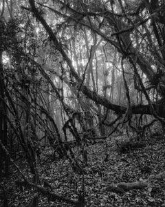 Bosque Alto-Andino Charrascal, Silver Gelatin Print