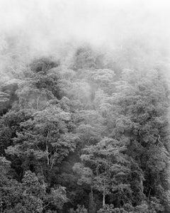 Bosque de niebla II Chicaque, Silver Gelatin Print