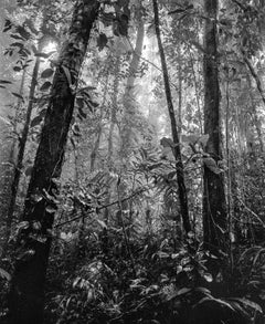 Bosque Tropical Húmedo II Nuquí, Pigment Prints