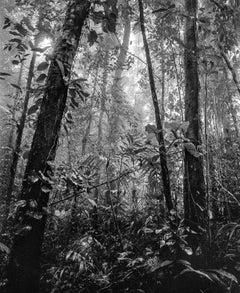 Bosque Tropical Húmedo II Nuquí, Silver Gelatin Print