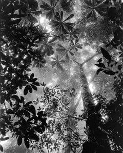 Bosque Tropical Húmedo Nuquí, Silver Gelatin Print