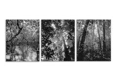 Manglar Nuquí, Bosque Tropical Húmedo Nuqui I & II (Triptych) Pigment Prints