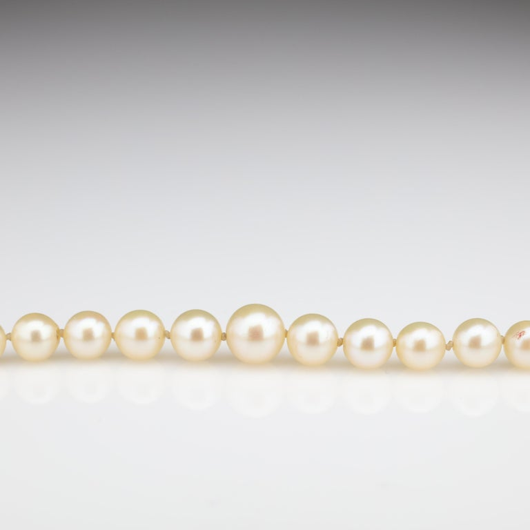 Mikimoto Original Strand of First Viable Cultured Pearls, circa 1920s For Sale 5