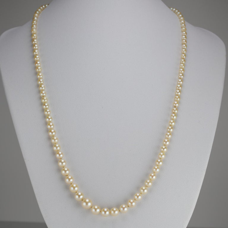 Mikimoto Original Strand of First Viable Cultured Pearls, circa 1920s For Sale 9