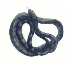 Coiled Snake (Ready to strike)