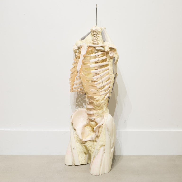 About  A skeleton with resin body, ribs and spinal column used in U.S. Military anatomy classes. A hook can be added to the threaded metal rod for hanging. Very heavy.   Creator U.S. Military. Date of manufacture circa 1970s. Materials and