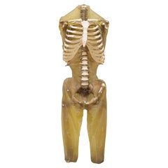 Military Anatomy Class Resin Skeleton, circa 1970