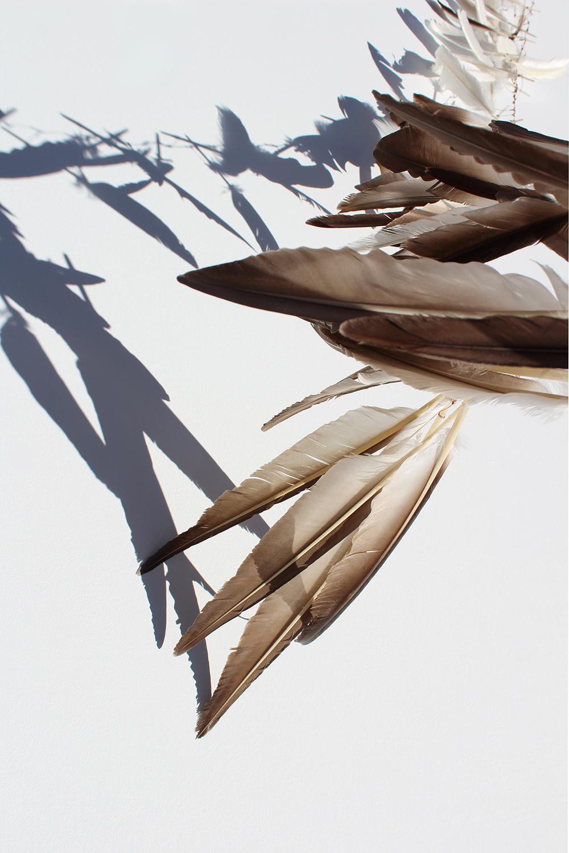 """Plume Umbra, II"", print, feathers, shadows, blue, copper, orange, gold"