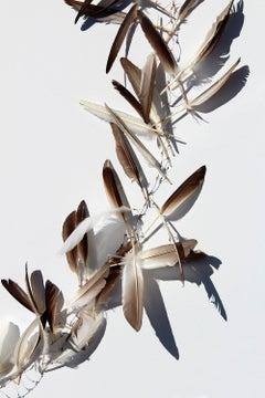 """Plume Umbra, V"", print, feathers, shadows, blue, copper, orange, gold"