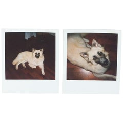 Miquel Arnal Set of Polaroid Photographs