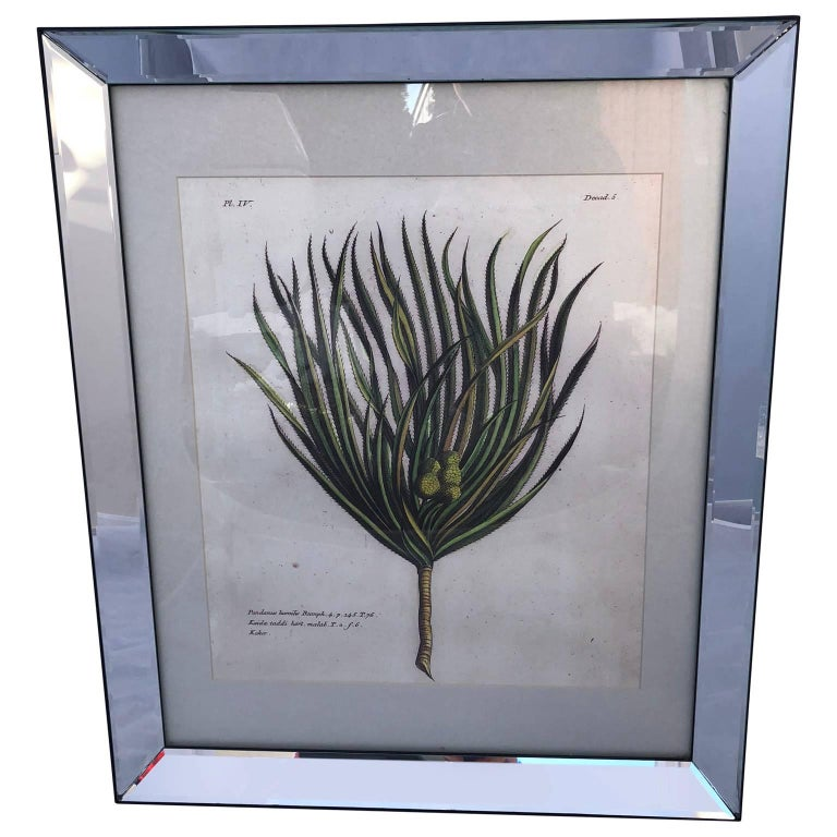 19th century hand colored botanical engraving of a palm tree specimen