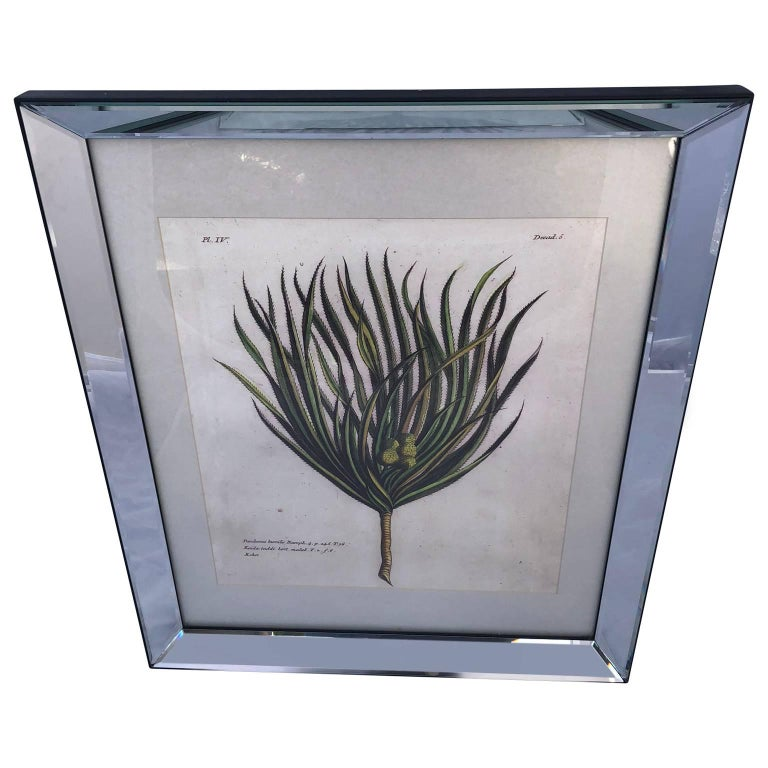 Modern Mirror-Framed Hand Colored Botanical Engraving of Exotic Flora, France For Sale