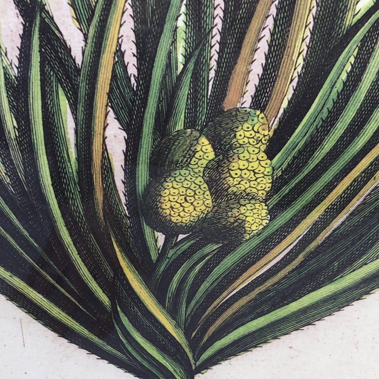 European Mirror-Framed Hand Colored Botanical Engraving of Exotic Flora, France For Sale