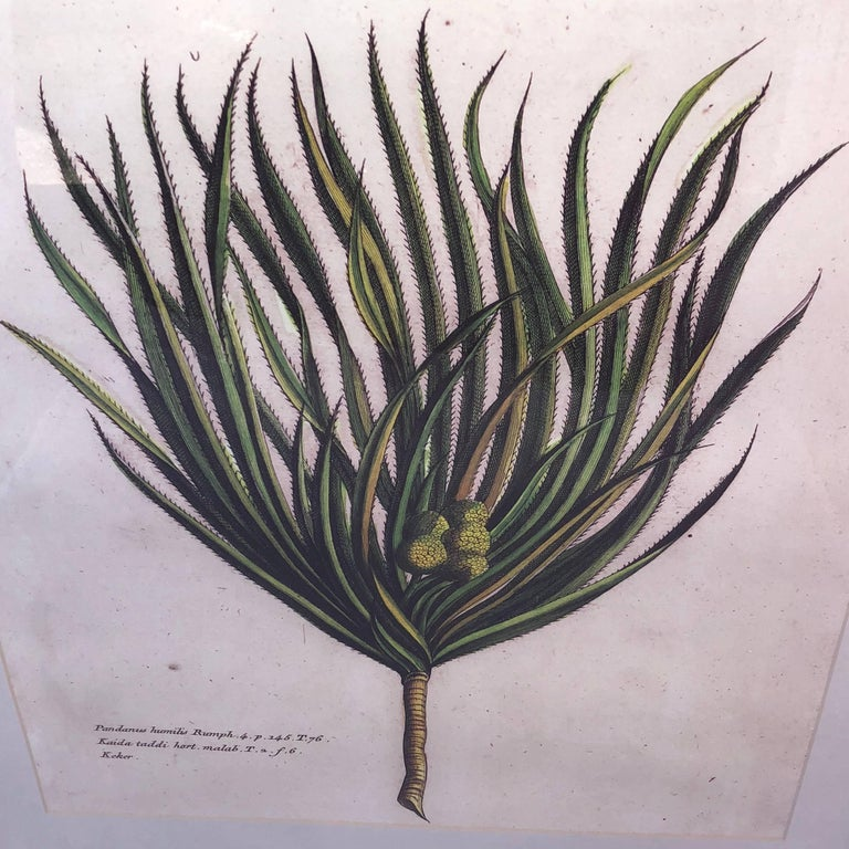 Mirror-Framed Hand Colored Botanical Engraving of Exotic Flora, France In Good Condition For Sale In Haddonfield, NJ
