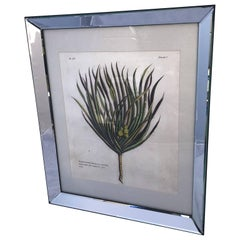 Mirror-Framed Hand Colored Botanical Engraving of Exotic Flora, France