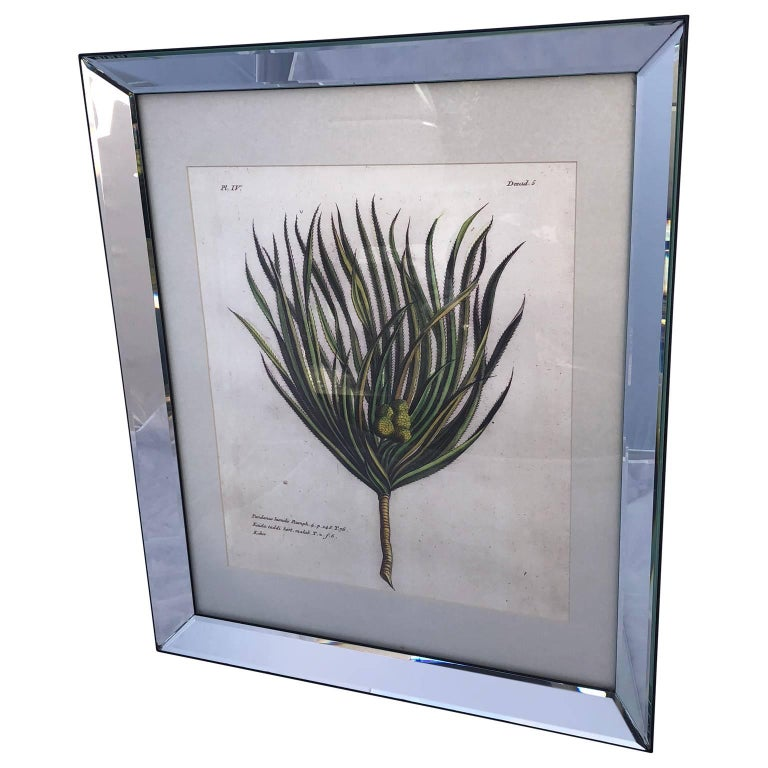 Mirror-Framed Hand Colored Botanical Engraving of Exotic Flora, France For Sale