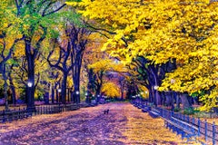 Autumn in Central Park with Black Dog