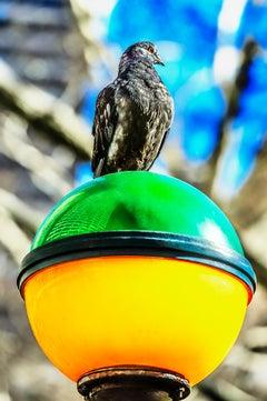 Black Bird on Colorful Subway Light