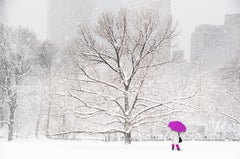 Central Park: Umbrella in the snow