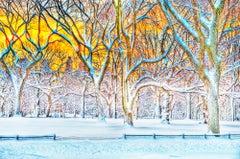 Central Park Winter Scene