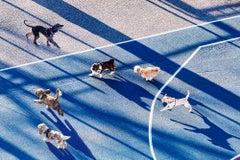 Dogs Running In Park With Early Morning Light,  New York City
