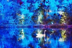 Fairy tale Blue Duck Glides on a Magical Blue Pond