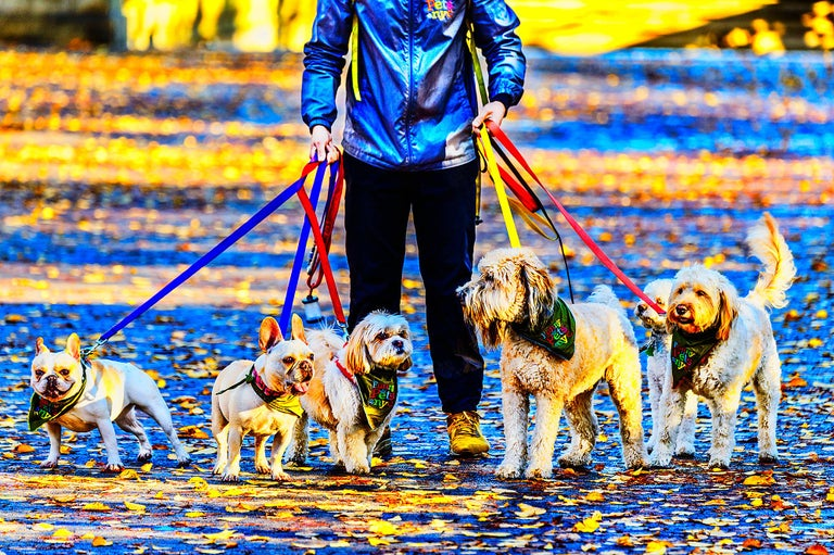 Mitchell Funk Color Photograph - Five Dogs on a Leash, Central Park