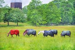 Horses in the Rain, East Hampton - Neutral palette