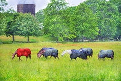 Horses in the Rain, East Hampton - Neutral palette