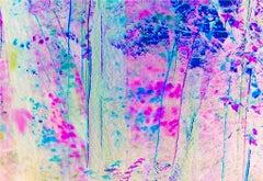 Impressionist Magenta Trees Central Park