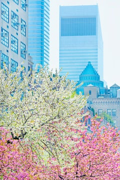 Park Avenue with  pastel colors in spring light