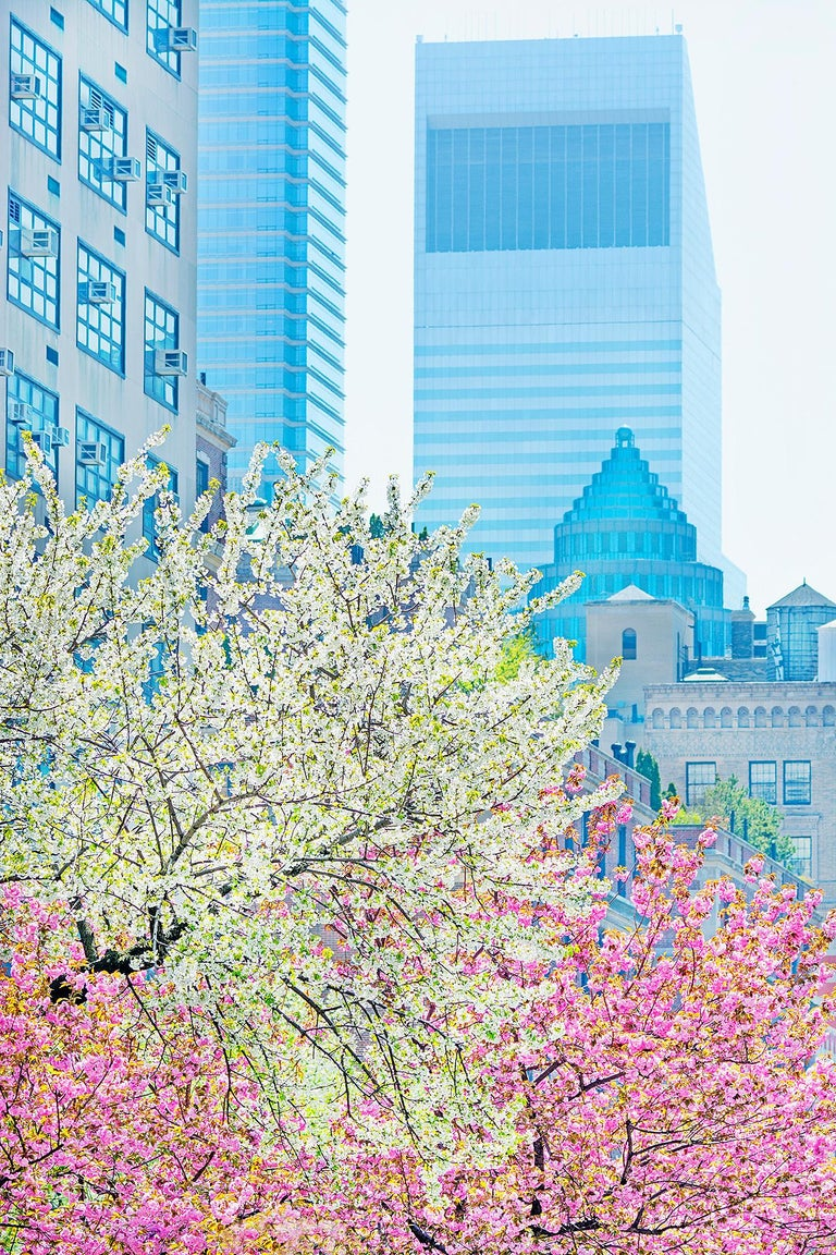 Mitchell Funk Landscape Photograph - Park Avenue with  pastel colors in spring light