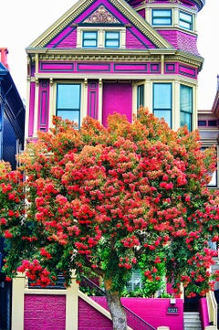 Pink and Purple Victorian House with Red Tree