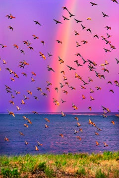 Rainbow in East Hampton with a Celebrating Flock of Birds  - Magenta Sky