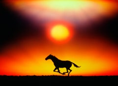 Running Horse at Sunset - Dave Grusin Album Cover