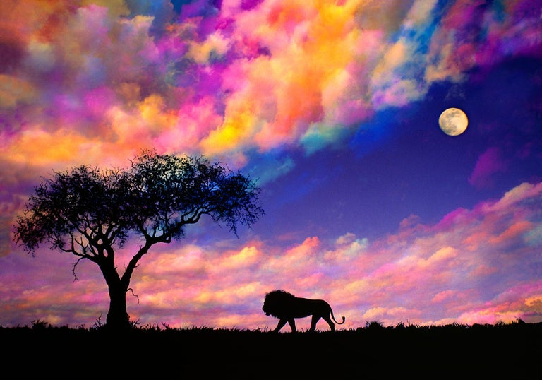 Mitchell Funk Landscape Photograph - Silhouetted Lion on the planes of Africa at Sunset