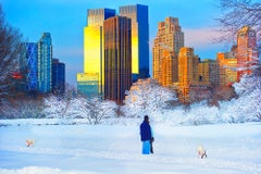Snowfall in Central Park with Dogs in Snow