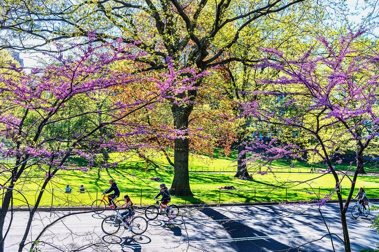 Mitchell Funk Landscape Photograph - Spring Bike Riders Central Park Spring Foliage
