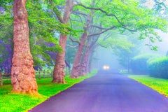 Trees On Foggy Lane In East Hampton New York - Mutted Color