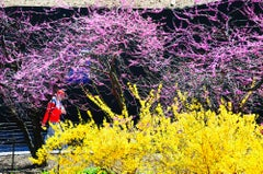 Yellow Flowers  and Pink Flowers in Central Park