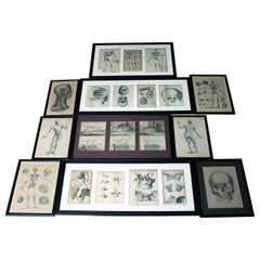 Mixed Group of Twenty Framed 19th Century Anatomical Engravings and Prints