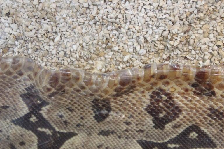 Modern Framed Snakeskin Shadowbox For Sale 6