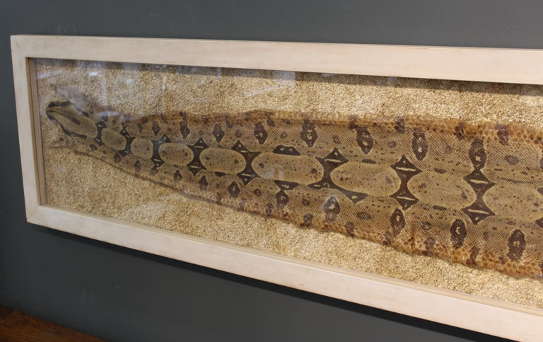 Modern Framed Snakeskin Shadowbox For Sale 8