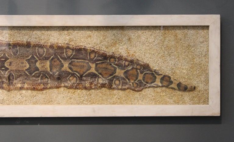 20th Century Modern Framed Snakeskin Shadowbox For Sale