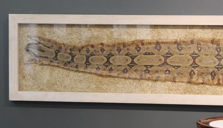 Animal Skin Modern Framed Snakeskin Shadowbox For Sale