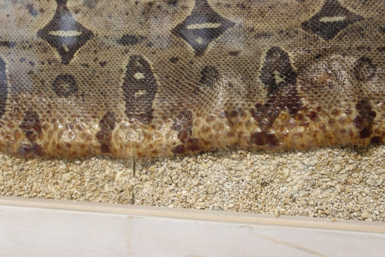 Modern Framed Snakeskin Shadowbox For Sale 3