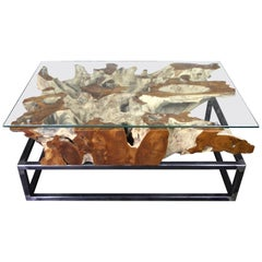 Modern Organic Teak Root Coffee Table on Industrial Steel Base with Glass Plate
