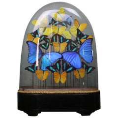 Modern Taxidermy Butterflies under 19th Century Dome on Ebonized and Brass Base