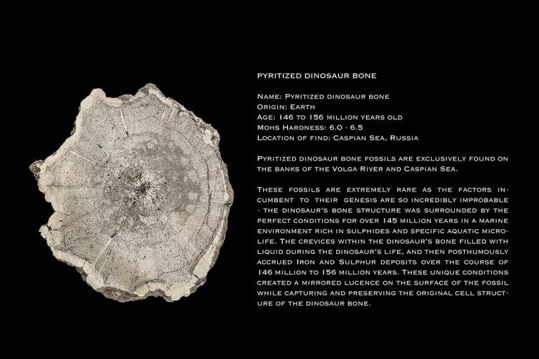 Women's or Men's Monique Péan Pyritized Dinosaur Bone and White Diamond Ring, 18 Carat White Gold For Sale