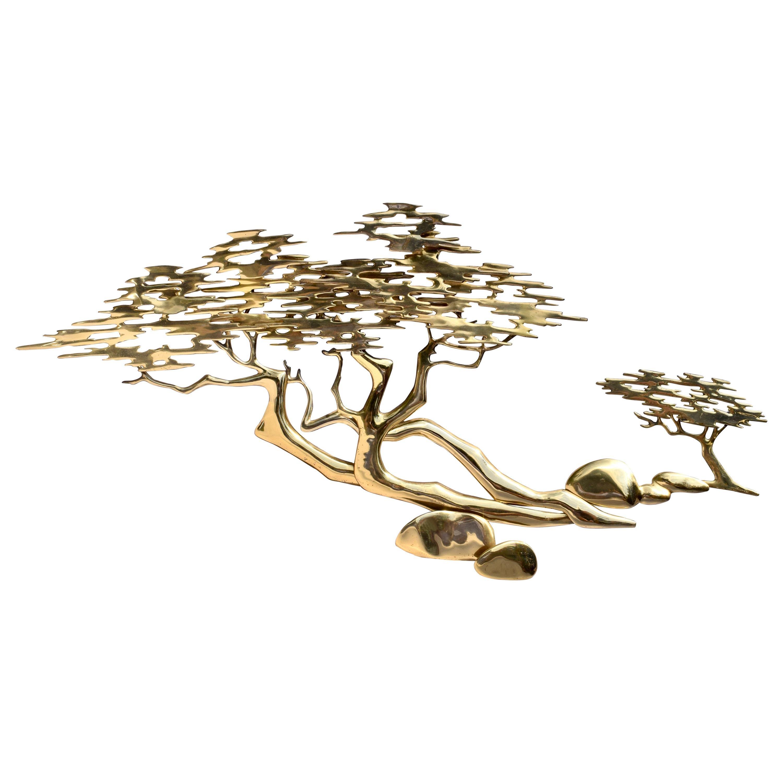 Monterey Lone Cypress  Bonsai Tree by Bijon